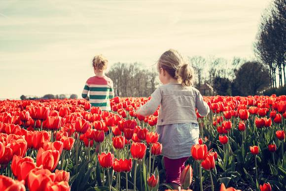 Top musuems and attractions - Keukenhof Amsterdam Welcome